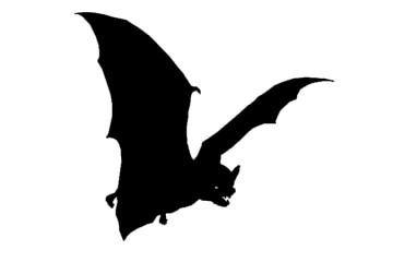 Bat Habitat Awareness